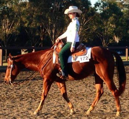Well Performed QH Gelding