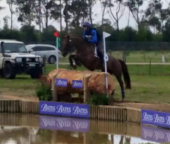 3* Eventing Mare - reduced due to lack or interest