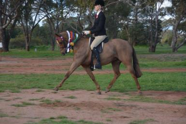 Weethalle Show