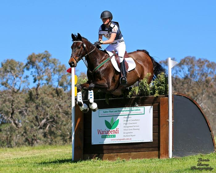 Talented Interschool Mount/1* Eventer