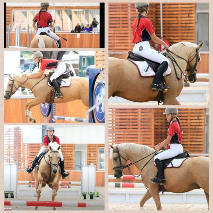 Beautiful Performance Pony