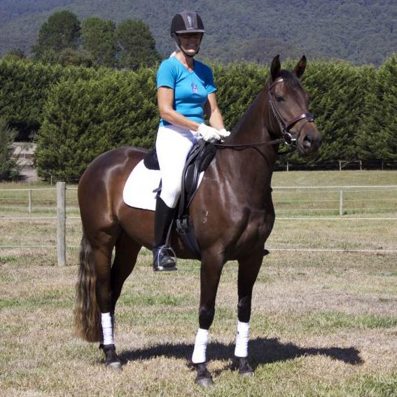 Quality Heritage Stock Horse Mare