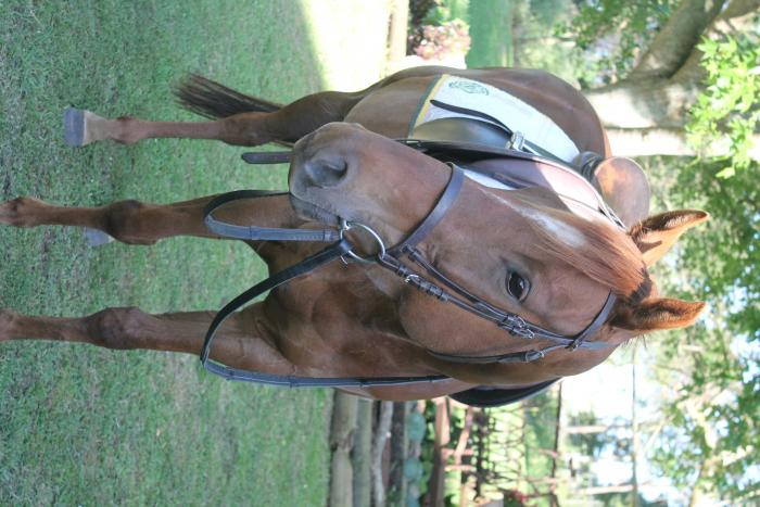 Small and very cute TB mare