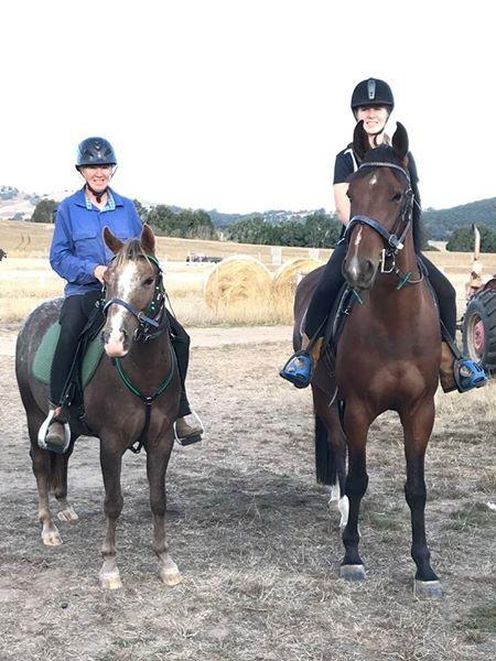 Young warmblood gelding