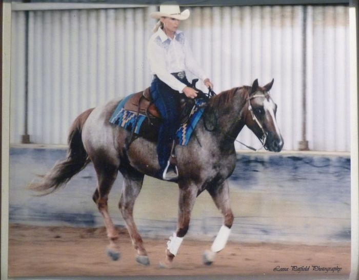 'Alfies Pickens' - Quiet Quarter Horse/Appaloosa