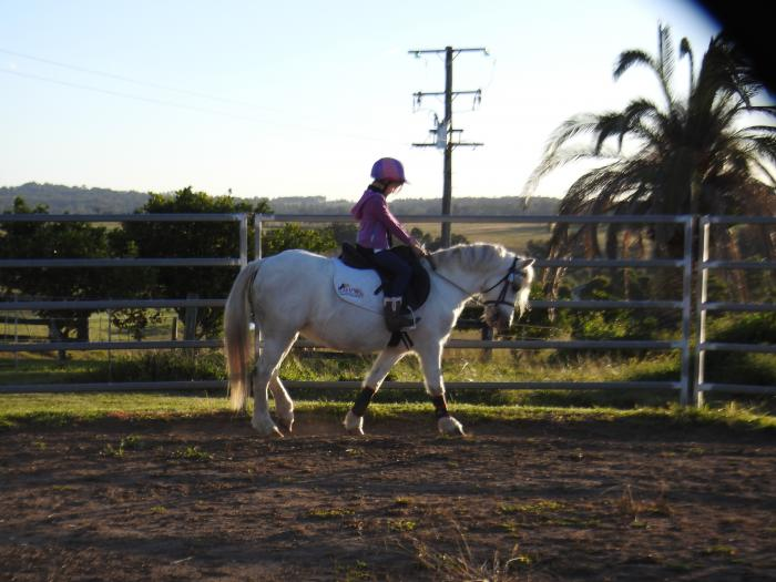 Grey Welsh Mare