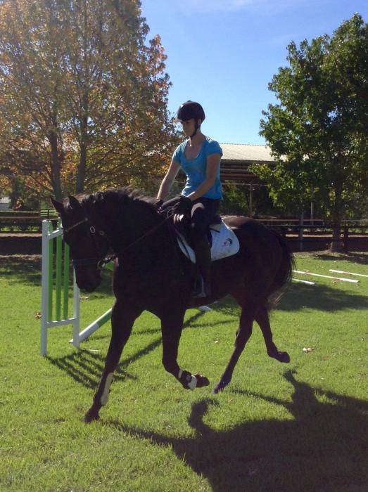Cute and Compact TB gelding