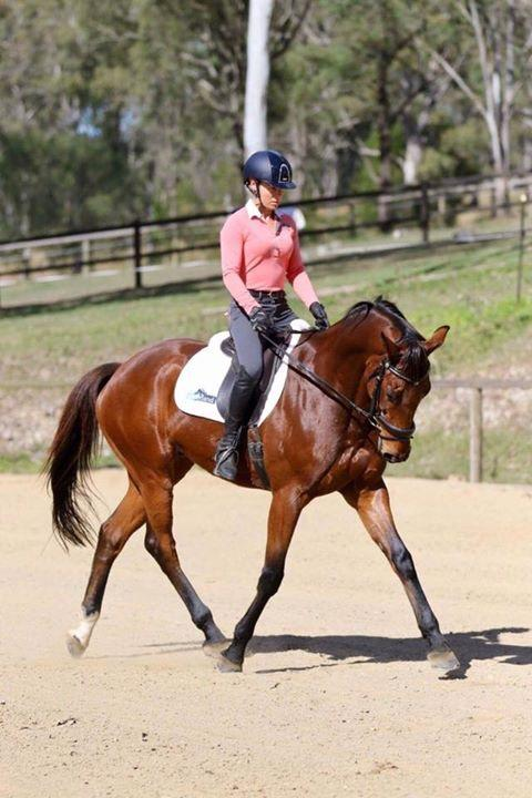 Stunning Dressage/Show/Eventer