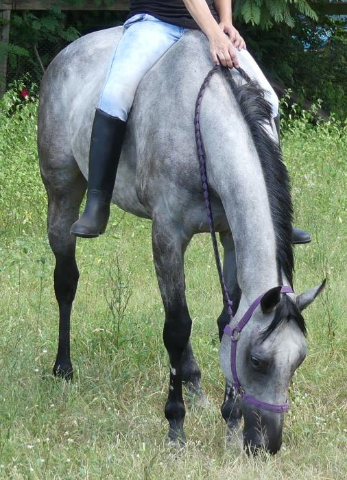 LACEY: SWEET, PLACID, DRESSAGE /CONFIDENCE BOOSTER