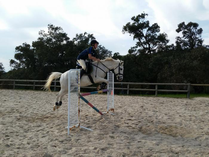 Perfect Pony Club Horse for Intermediate rider