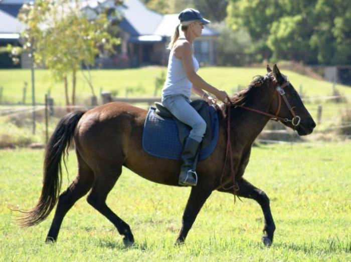 SUPER QUIET POCO BLUE MOON GELDING