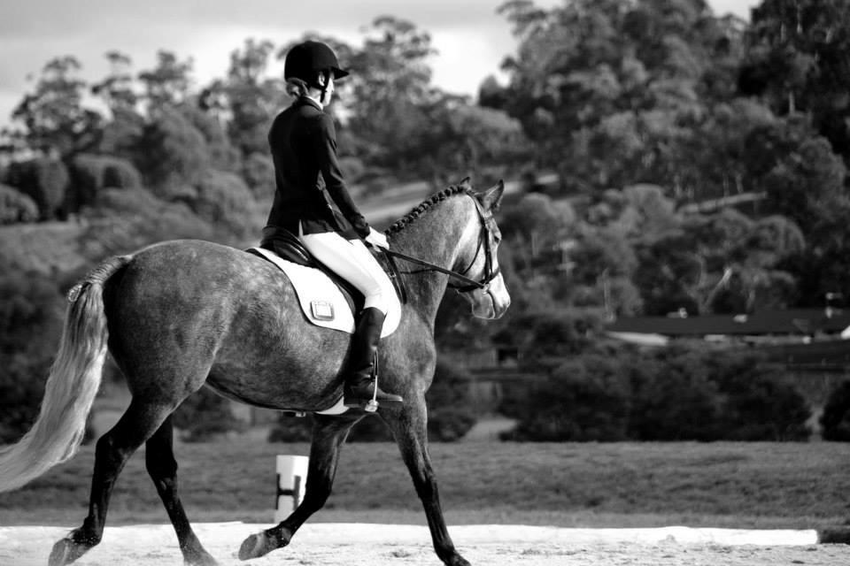 Connemara Sporthorse