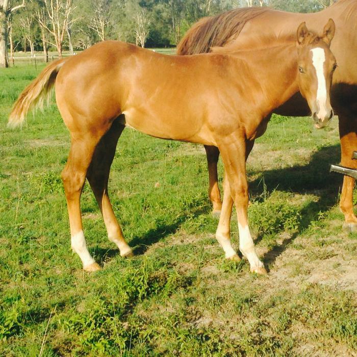 Stunning weanling colt