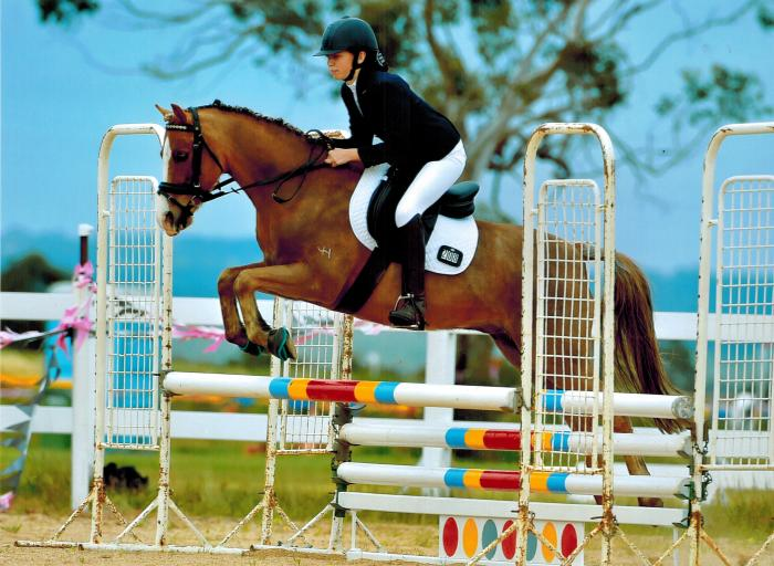 Bamborough Australis - Talented Performance Pony