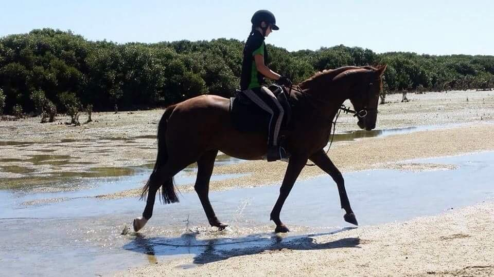 Great All Arounder: Trail, dressage