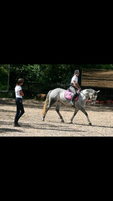 Lovely Small Grey Mare