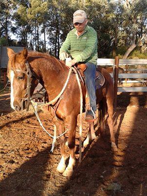 Qh x Riding Pony