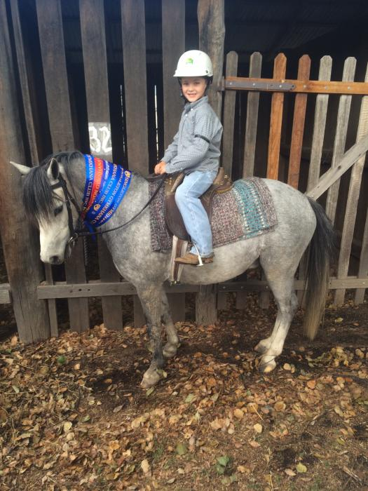 Quiet  Experienced Pony Club Pony