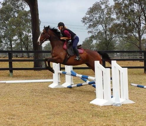 Retired Thoroughbreds for Sale