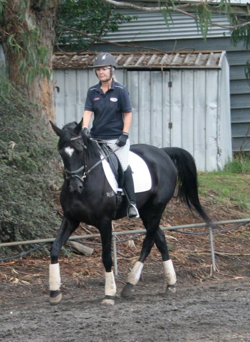 Spanish Andalusian Part Bred Gelding