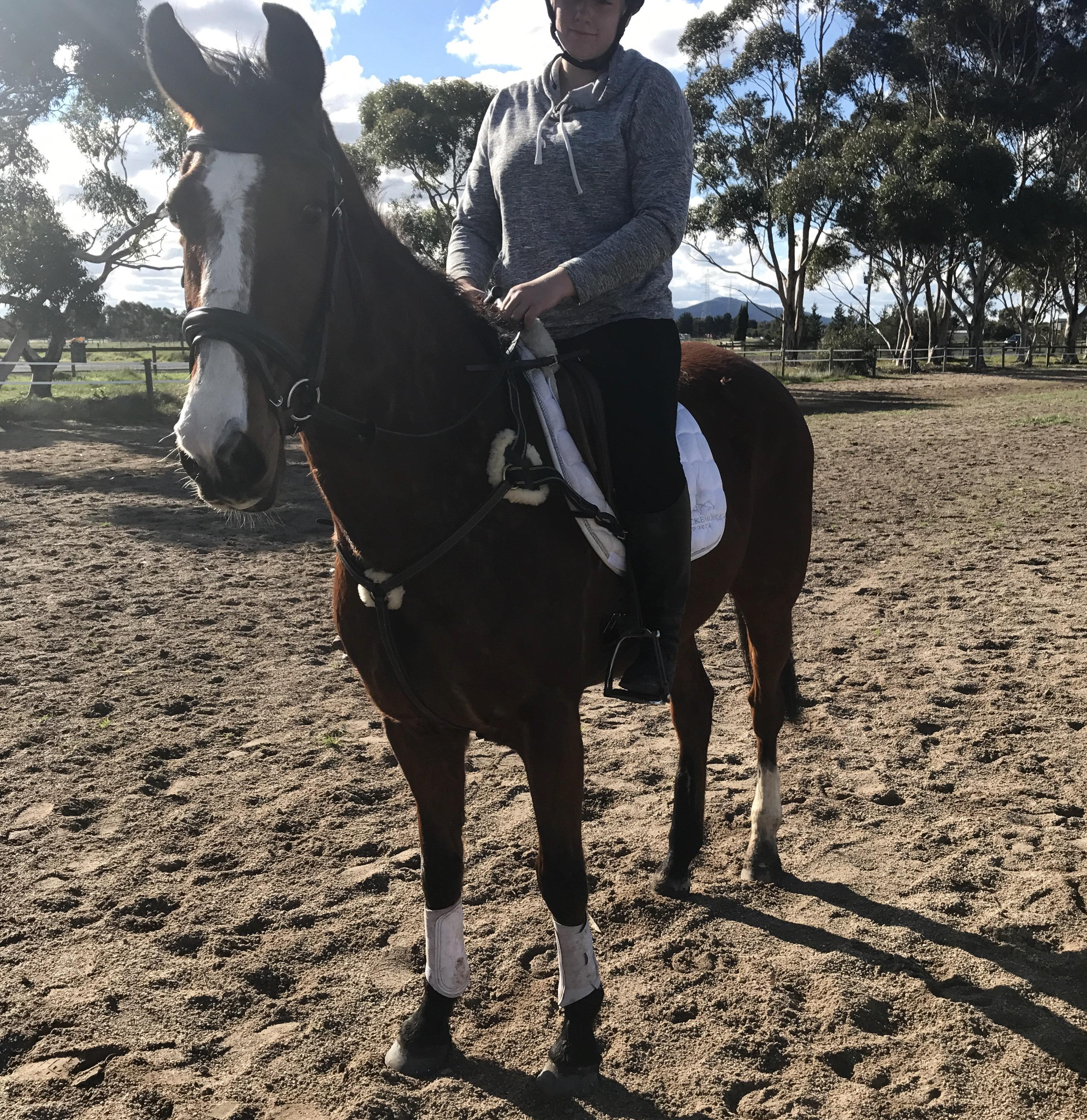 Educated Clydesdale x Gelding