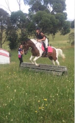 14.2hh Pinto x Arab Pony Club Mount