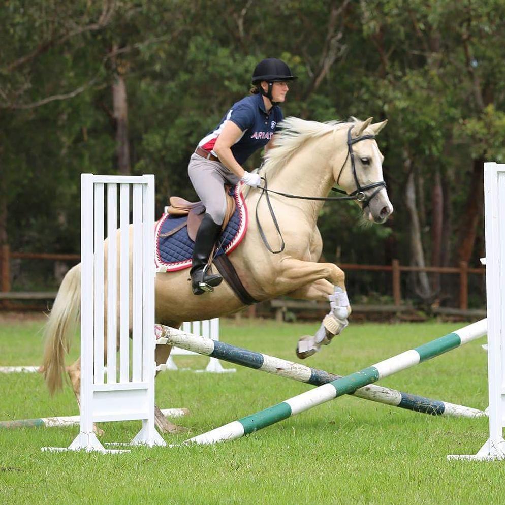 Your Dream Pony, 14.1hh Palomino Gelding