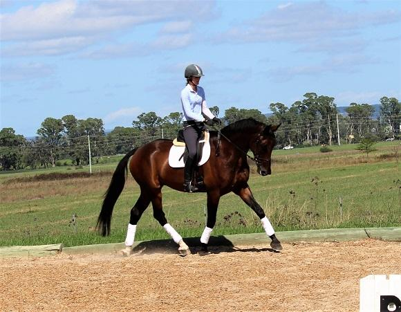 Exciting young dressage horse