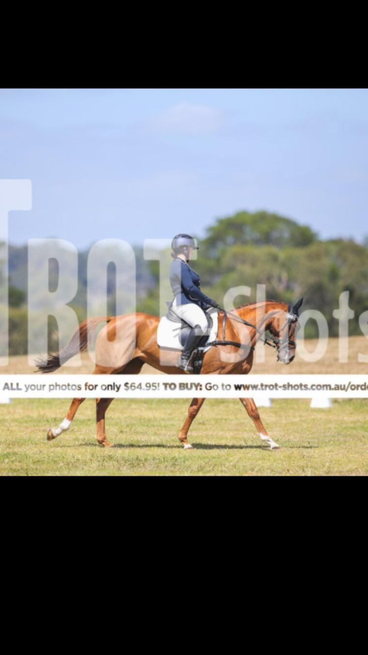 Super Eventing Mare - Waterford Khloe