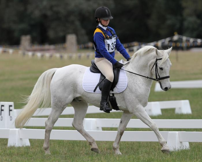 Ripper all-rounder pony