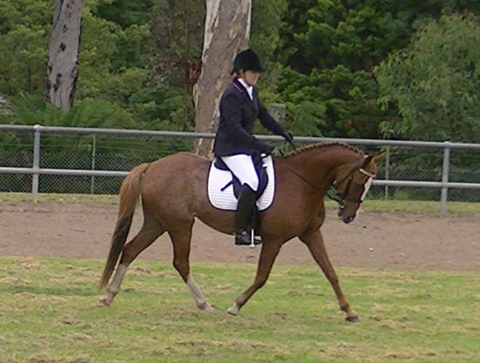 Stunning Galloway huge dressage potential