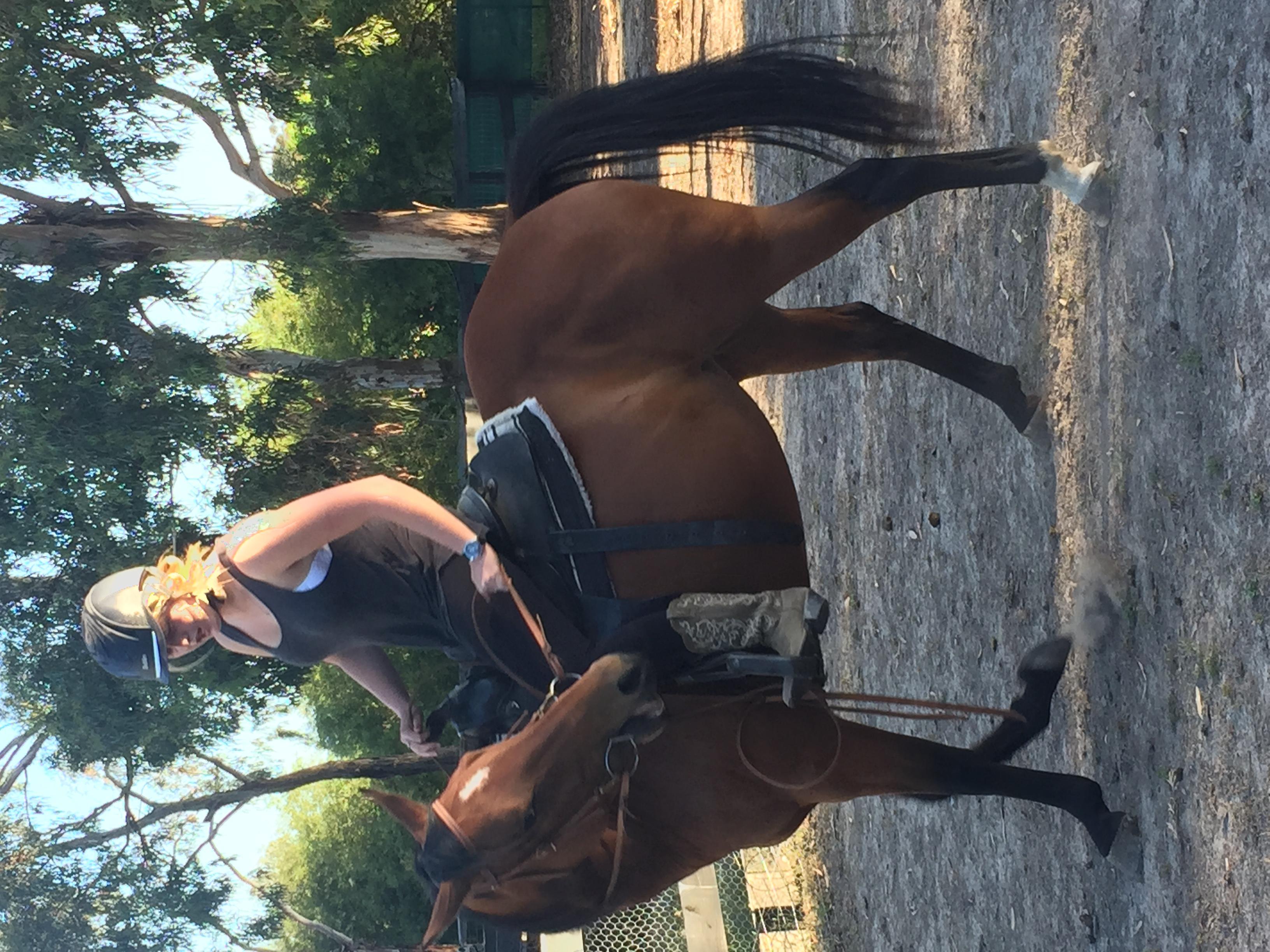 Quarter horse for sale