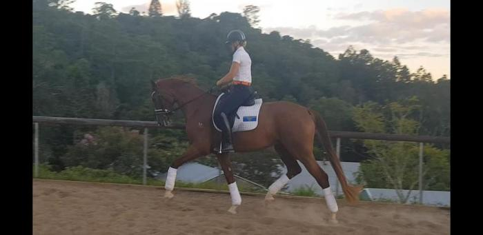 Exquisite 4yr old Mare with ENDLESS TALENT