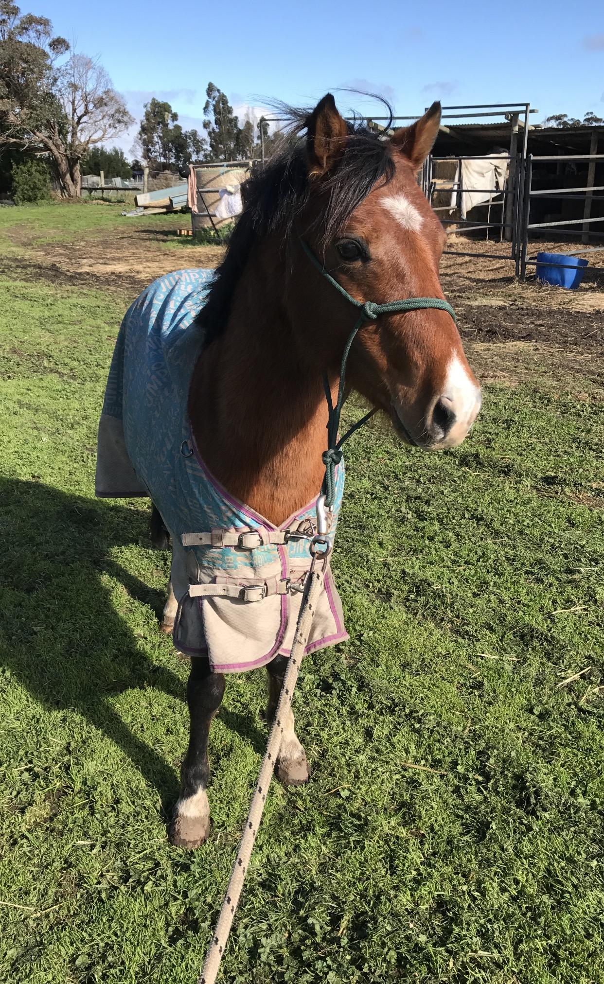 Prospect Child's Pony