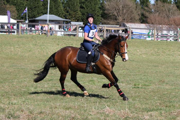Eye-catching Irish Sport Horse Mare