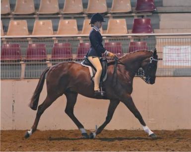 1st Rider 15-17 Years - SHC Youth Development Show (Lorelle Mercer)