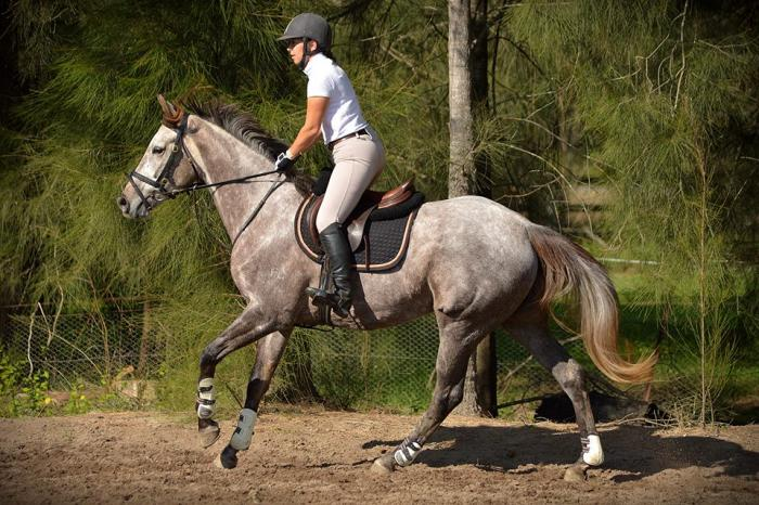 Multi Talented, Charming, Eye catching 5yo Tb Mare