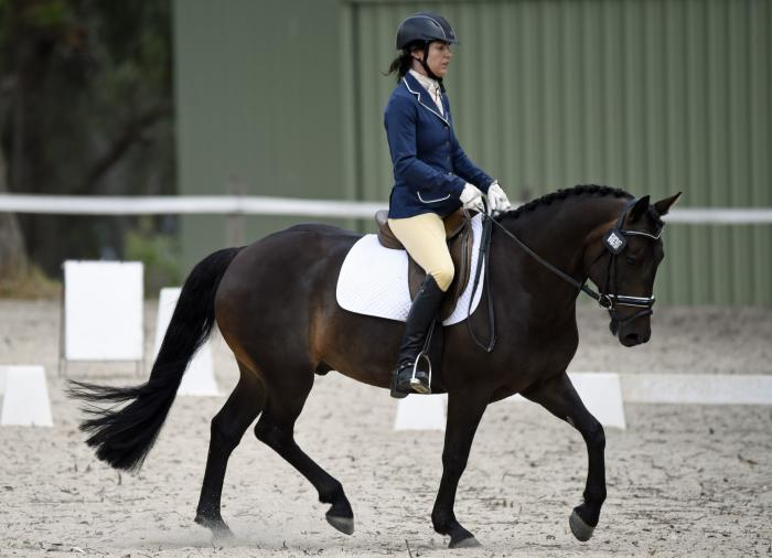 allround performance pony