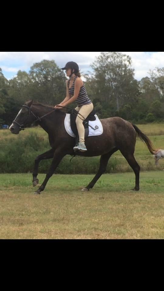 Appy mare