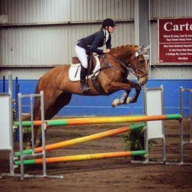Honest and talented Irish Sport Horse