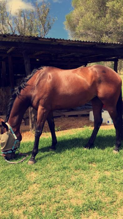 Broodmare/ Project Horse