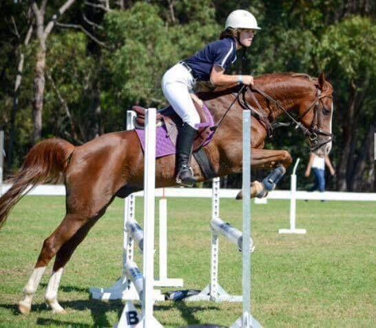 Talented Jumper / PC Pony 14H ArabxWelsh Gelding