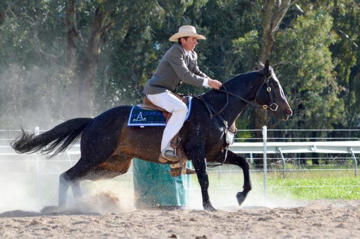 ASH/ANSA Performance Stallion