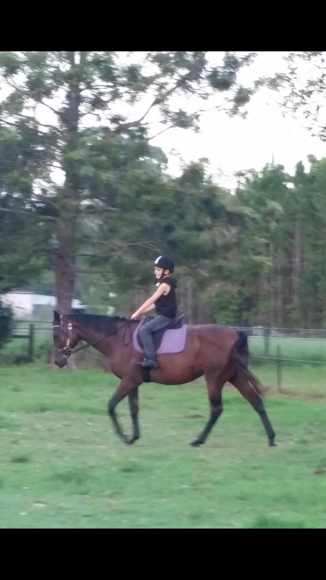 Beautiful kind quiet Thoroughbred Mare