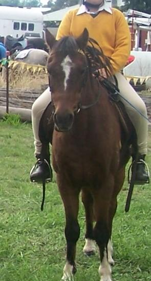 Experienced Pony Club Pony