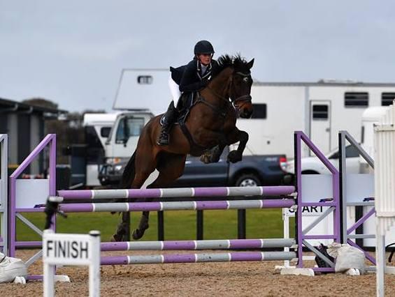 Talented show jumper