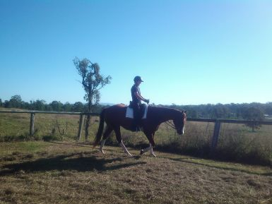 Coby Long Rein