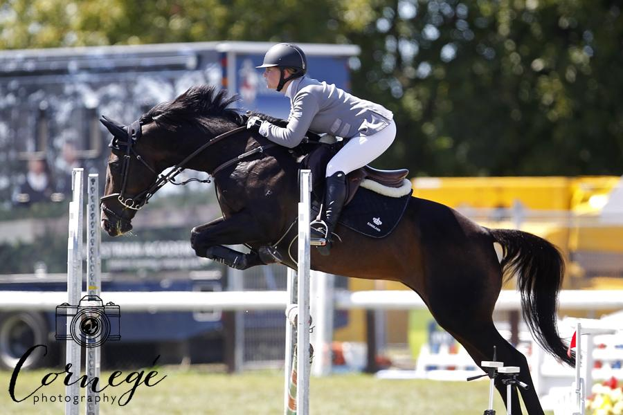 SHOW JUMPER- EVENTER