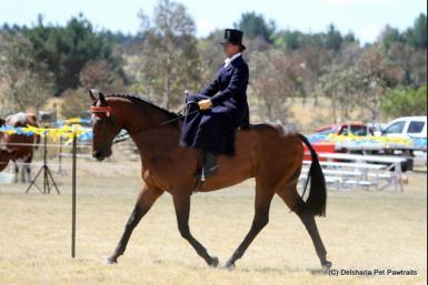 Chev side saddle