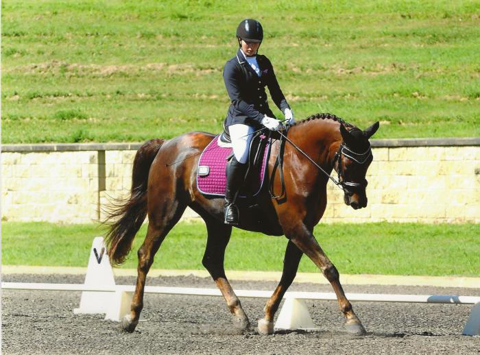 Warmblood Gelding by French kiss